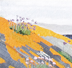 From the lichen clad rocks of north Gigha