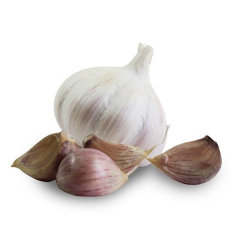 1043_red_duke_seed_garlic_main.jpg