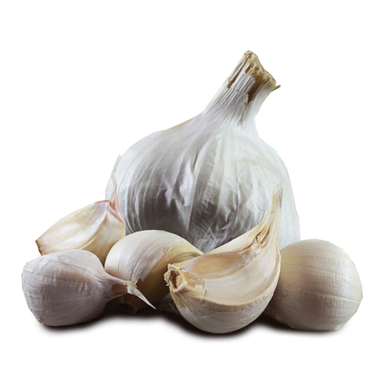 1027_provence_seed_garlic_main.jpg