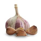 1063_mikulov_seed_garlic_main.jpg