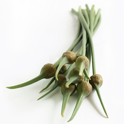 1201_elephant_garlic_scapes_main.jpg