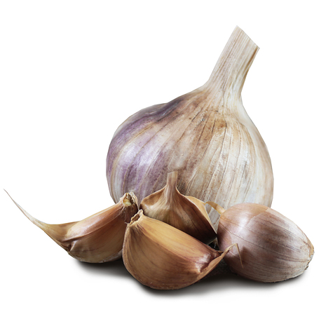 1012_early_purple_seed_garlic_main.jpg