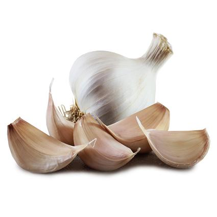 1029_solent_wight_seed_garlic_main.jpg