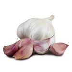 1025_picardy_seed_garlic.jpg