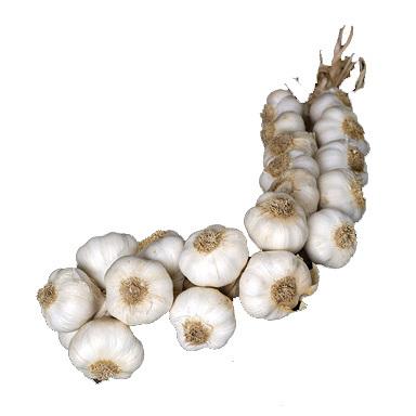 Solent Wight plait 20 bulbs