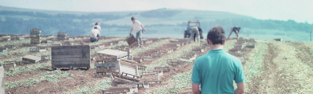 Harvesting 1980s