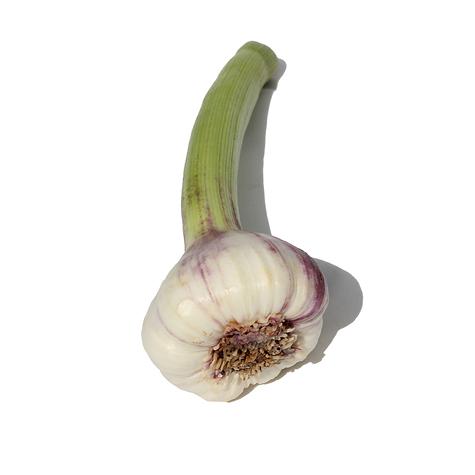 Green Early Purple Wight Bulb
