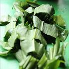 wild-garlic-pesto-recipe