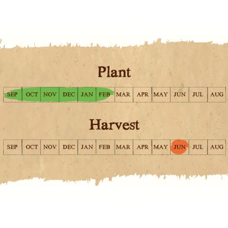 Lautrec Wight seed calendar