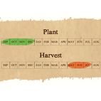 Iberian Wight seed calendar