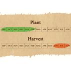 Vallelado seed garlic calendar