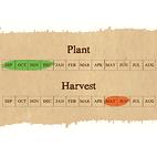 Extra early seed garlic calendar