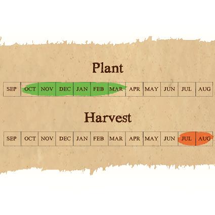 Picardy Wight seed garlic calendar