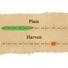 Elephant Garlic seed calendar