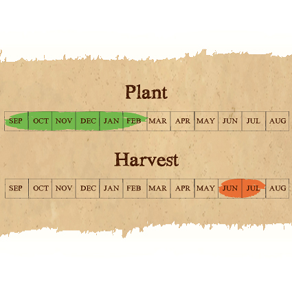 Carcassonne seed garlic calendar