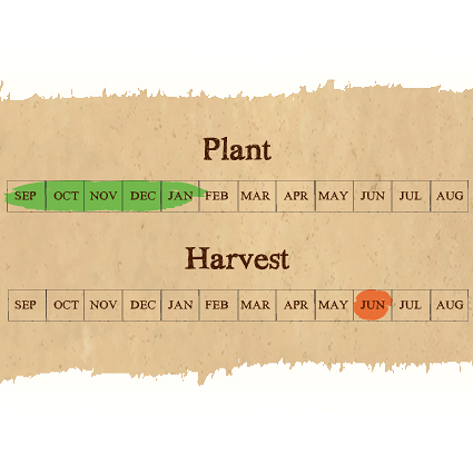 Provence Wight seed garlic calendar
