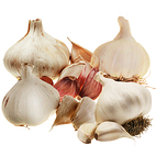 Autumn Garlic Seed Pack