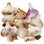 Garlic Lovers Planting Pack