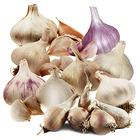 Ultimate Garlic Growing Pack