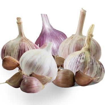 Heritage Seed Garlic Planting Pack