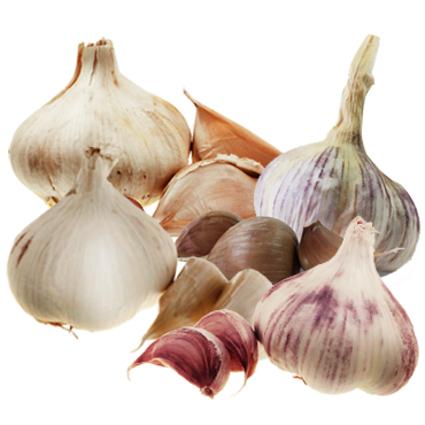 Winter Garlic Planting Pack