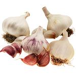Spring Garlic Planting Pack