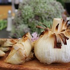 Roasted Elephant Garlic