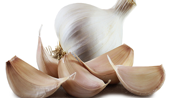 Solent Wight seed garlic