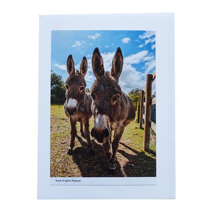 2_Donkeys