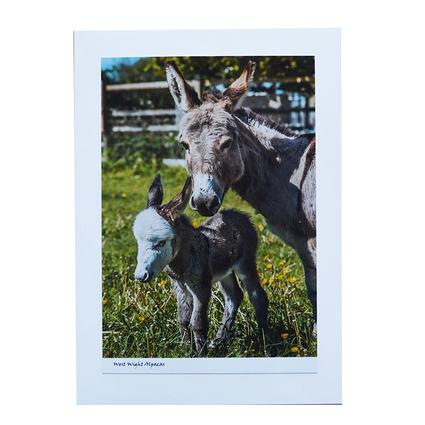 Baby_Donkey