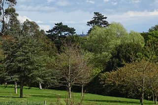 View of All Saints Church in Ryde through trees
