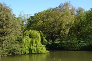 Barton weeping willow over Lower Pond