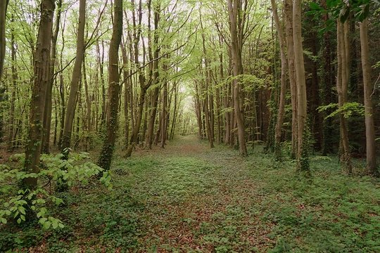 Barton woodland avenue