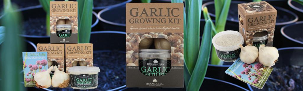 Garlic growing kit