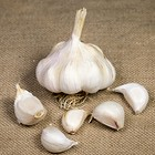 Mersley Wight Seed Garlic
