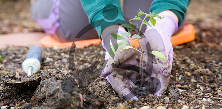 community_gardening.jpg