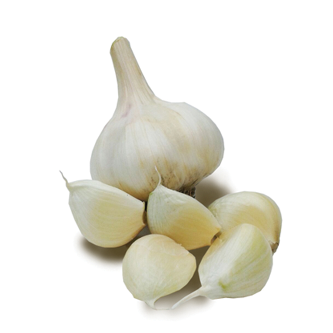 Planting garlic in 2019: calendar 41