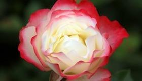 florist section.jpg