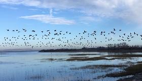 harbour birds.jpg