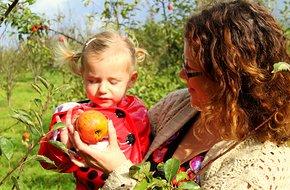 Heritage Orchard.jpeg