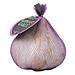 Jumbo elephant garlic