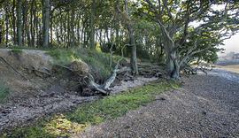 Paul Adams 151002FDC_4636+ Salterns Copse coastal errosion overlooking Copperas (2).jpg