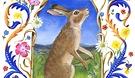 Cornfield Hare.jpg