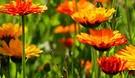 Flowers_Lizzie Dymock_web.jpg