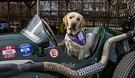 Canine_Partners_2019_AlexBenwell118.jpg