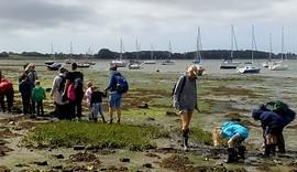 Mud hunt 2_Dell Quay_09 Aug 2019_Steve Baldwin.jpg