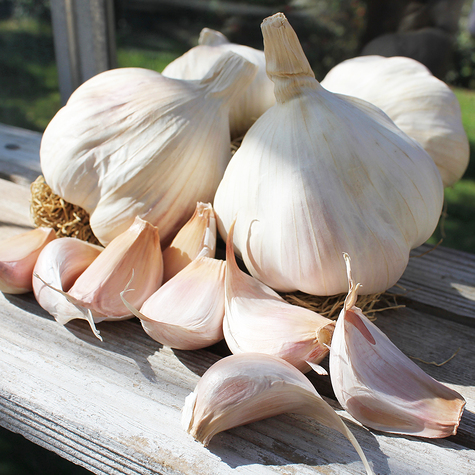 tuscany_wight_seed_garlic_the_garlic_farm.jpg