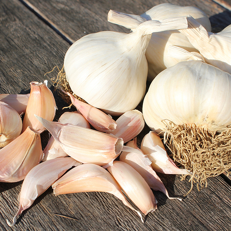 picardy_wight_seed_garlic_the_garlic_farm.jpg