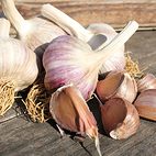 caulk_wight_seed_garlic_the_garlic_farm.jpg