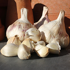 provence_wight_seed_garlic_the_garlic_farm.jpg